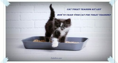 How to Train Your Cat for Toilet Training
